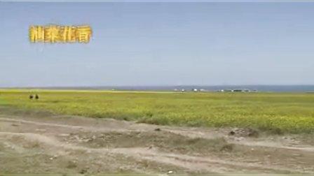 穿行大西北之青海、甘肃自驾游(四)【陶醉大美青海湖】