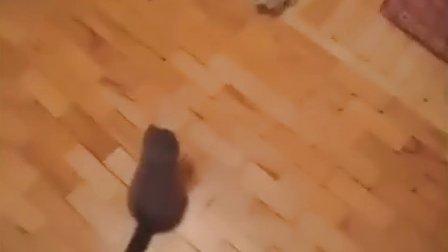 【搞笑动物】喵星人袭击玩具狗