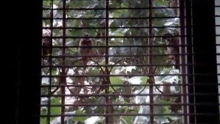 窗台上的小鸟3