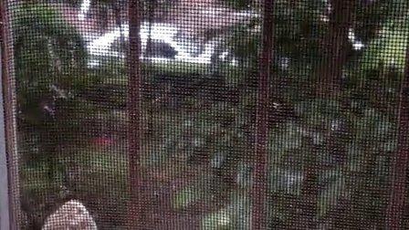 窗台上的小鸟4