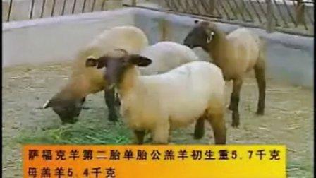 肉羊养殖1《肉羊养殖技术视频》视频软件