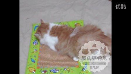 猫凉席视频