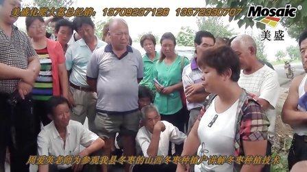 大荔冬枣之周爱英老师讲解冬枣种植管理技术01