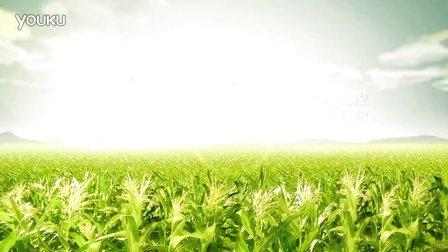 福临门黄金产地玉米油