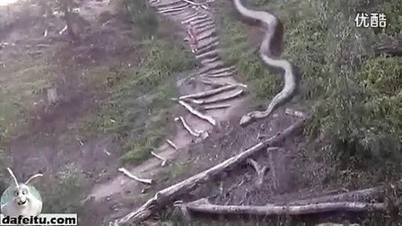 世界上最大的蛇之一,目测身长五十多米_标清