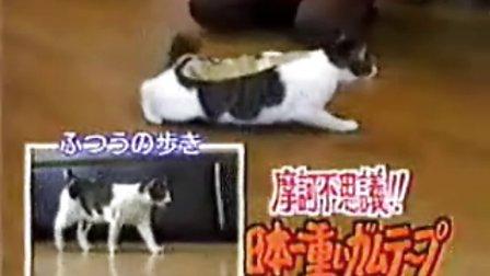 不可思议的猫咪