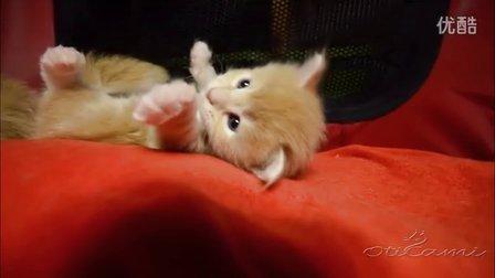 OtiCami Kittens