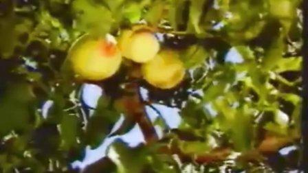 植物生长剂在果树上的运用