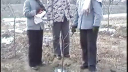 果树矮化密植栽培技术2
