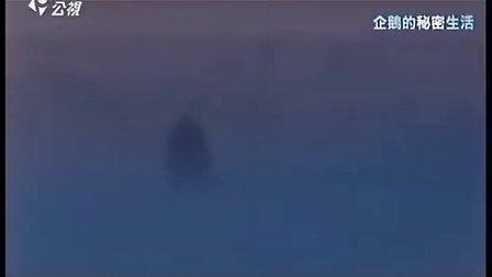 公共電視.-.十點全紀錄:企鵝的祕密生活