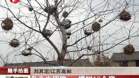 鸟儿也团购 一棵树18个窝 111218 每日新闻报