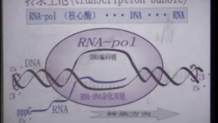 复旦大学上海医学院生物化学精品课程 52(免费)