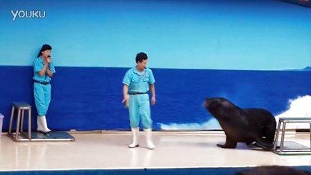 厦门海底世界海狮学饲养员走路