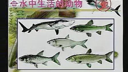 初二生物《水中生活的动物》初二生物优质课展示初二八年级生物优质示范课教学视频