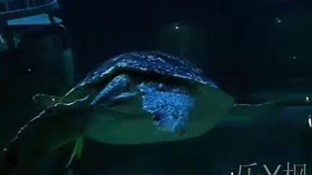 【乐Y枫】北海海底世界人鲨共舞表演!