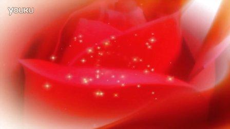 j472- 红玫瑰花婚礼婚庆花朵视频素材