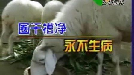 肉羊养殖/小尾寒羊养殖技术1