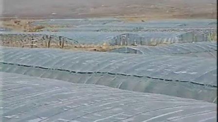 草莓大棚栽培技术