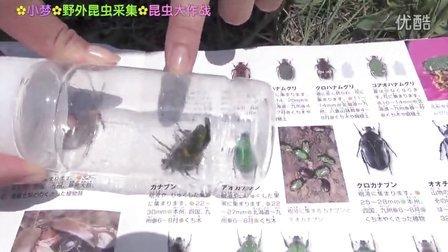 昆虫大作战 野外昆虫采集