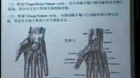 哈医大系统解剖学 12动脉