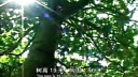 瓮安古树名木