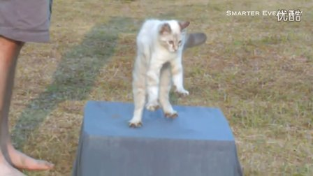 Slow Motion Flipping Cat Physics _ Smarter Every Day 58~1