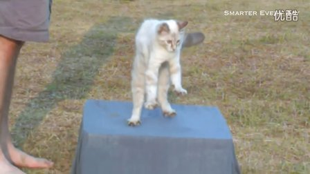 Slow Motion Flipping Cat Physics _ Smarter Every Day 583