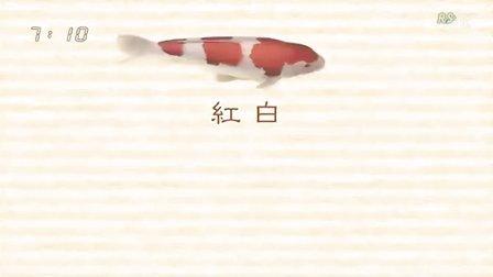 一部很好的锦鲤入门视频-[美之壶].[NHK].[RSYZ].[Binotsubo].[锦鲤]