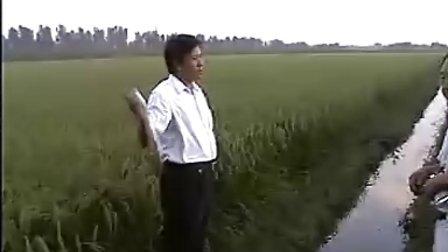 金太龙追肥宝在天津地区的显著效果!