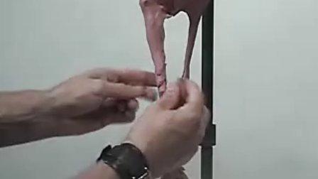 雕塑艺术造型设计教程(1)