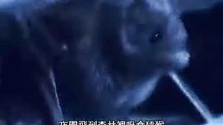 BBC亚马逊深渊CD4