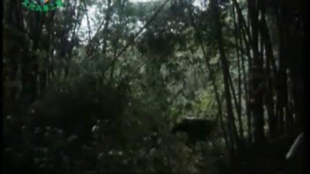《双头鹰之谜》[峨眉1987]