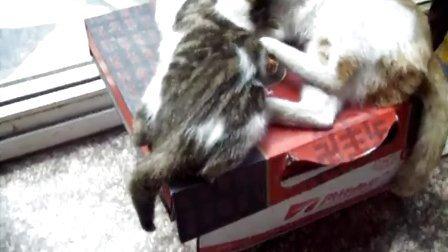给大猫擦澡的小猫咪