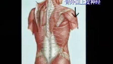 神经系统解剖 人卫版