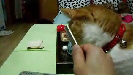 喜欢抽烟的小猫