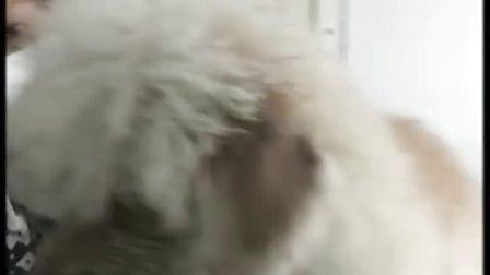 汤姆狗加盟宠物店 布莱斯森林宠物浴液批发 宠物店加盟