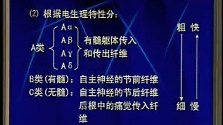 中国医科大学【生理学视频】43.
