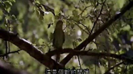 电影《杨过与小龙女》(张国荣 刘雪华 恬妞)主题曲片段