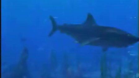 蓝猫淘气海洋系列--敏感的噬人鲨