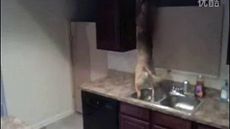 狗狗逃离厨房!逃生能力极强!【谷姐特搞队】
