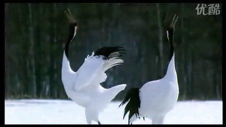 """《迁徙的鸟》精彩片段之""""鹤"""""""