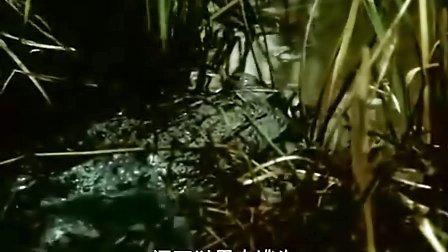 雌雄争霸战DVD[国语配音CD4]