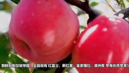 中国苹果之乡 陕西淳化苹果