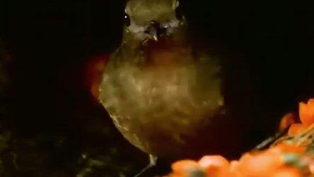 雌雄争霸战DVD[国语配音CD2]