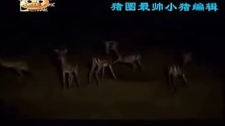 罕见群狮教授幼狮捕猎