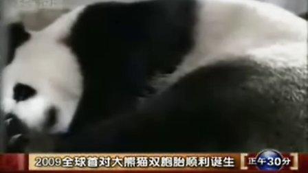 全球首对大熊猫双胞胎顺利诞生