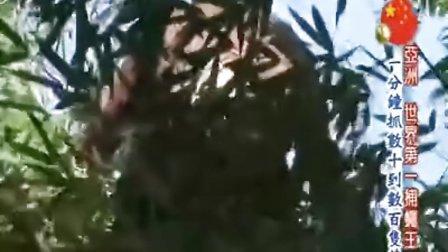 世界第一等20091014亚洲第一捕蝇王