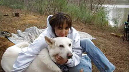 白德牧(白色德国牧羊犬)aadogaa com
