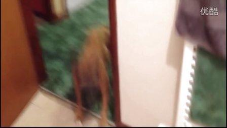 【时光精品】当狗狗们遭遇洗澡......