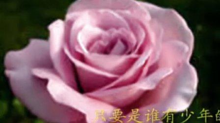 《蔷薇蔷薇处处开》邓丽君
